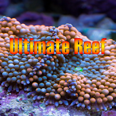 UltimateReef