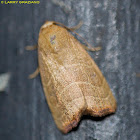 Wavy-lined Mallow Moth