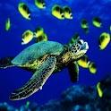 3D Turtle logo