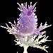 Flora of Texas: FW Prairie Icon