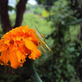 nature by Ajin Ponipas - Flowers Single Flower