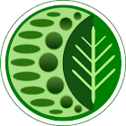 Herb & Spice Helper icon