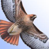 Sibley Birds - Lite