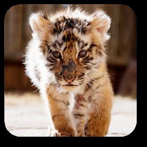 Little Tiger Live Wallpaper 1 0 Apk, Free Personalization
