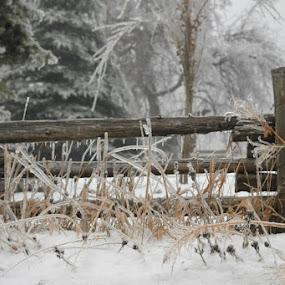 Ice storm  by Bonnie Lea - Landscapes Prairies, Meadows & Fields