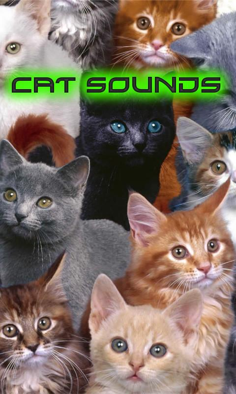 Cat Sounds - screenshot