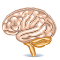 Brain Games - Brain Trainer icon