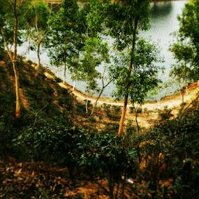 Beauty Of Bangladesh by Arif Hossain - Nature Up Close Trees & Bushes ( bangladesh, best photography, arif hossain photography, arif, photography )