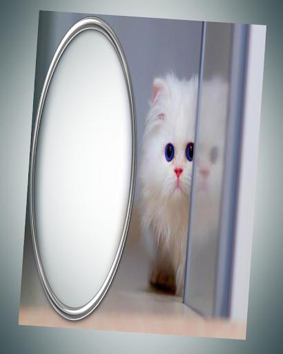 玩免費攝影APP|下載photo frames cat pic frames app不用錢|硬是要APP