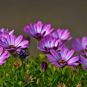 by Andre M de Jager - Flowers Flower Gardens