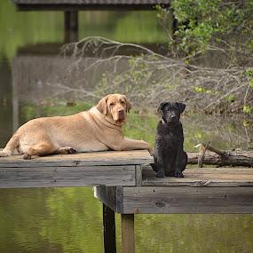 Sadie Mae & Mikey-Mbass 2014 by Mickey Bass - Animals Other Mammals ( #GARYFONGPETS, #SHOWUSYOURPETS )