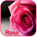 Lovely Rose LiveWallpaper