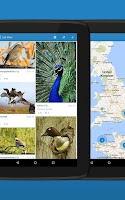 Screenshot of iKnow Birds 2 LITE - Europe