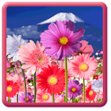 Flowers HD ScreenSaver icon