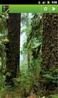Screenshot of Rainforest. White Noise