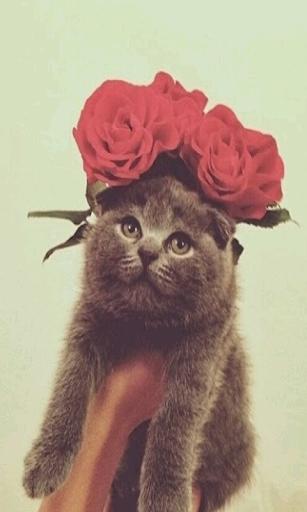 귀여운 고양이 사진