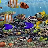 3D Aquarium Live Wallpaper HD
