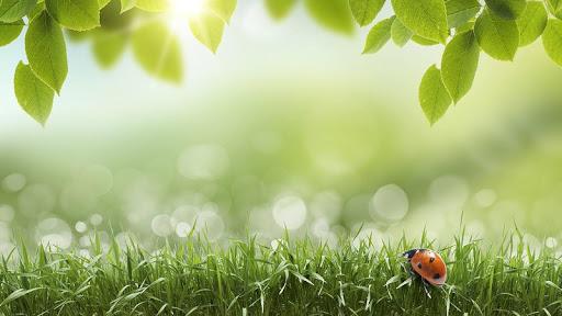 免費下載個人化APP|綠色春天動態壁紙 app開箱文|APP開箱王