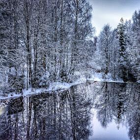 Reflection from the trees by Stine Engelsrud - Instagram & Mobile Instagram ( royalsnappingartists, landscape_captures, rsa_trees, mafia_naturelover, ic_trees, global_hotshotz, rsa_ladies, unitedbytrees, mst_photooftheday, ig_exquisite, ig_epicshots, stunning_shots, pro_ig, nature_up_close, rsa_water, ptk_nature, shotawards, treeshunter )