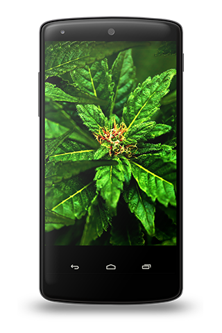 Weed Wallpapers 1.0 screenshots 7
