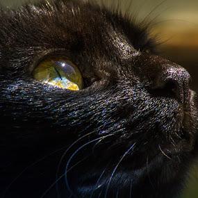 My Lisa by BO LED - Animals - Cats Portraits ( macro, cat, nature, natural, portrait, black, eye,  )