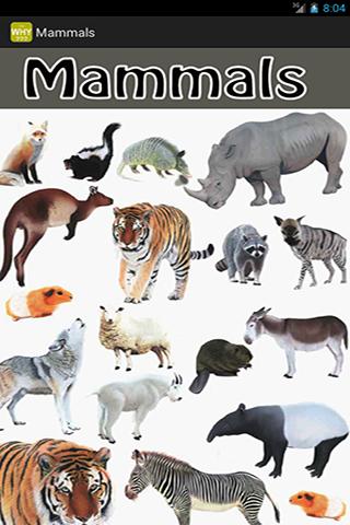 Mysterious Mammals