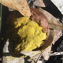 Orange-Staining Puffball
