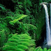 Rain Forest HD Live Wallpaper