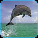El delfín 3d. Vídeo De Fondo icon