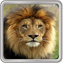 Animal Quiz icon