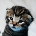 Kittens - Best & Sweet & Cute icon