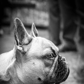 Danny by Fabio Grezia - Animals - Dogs Portraits