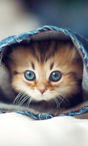 有趣的小猫壁纸