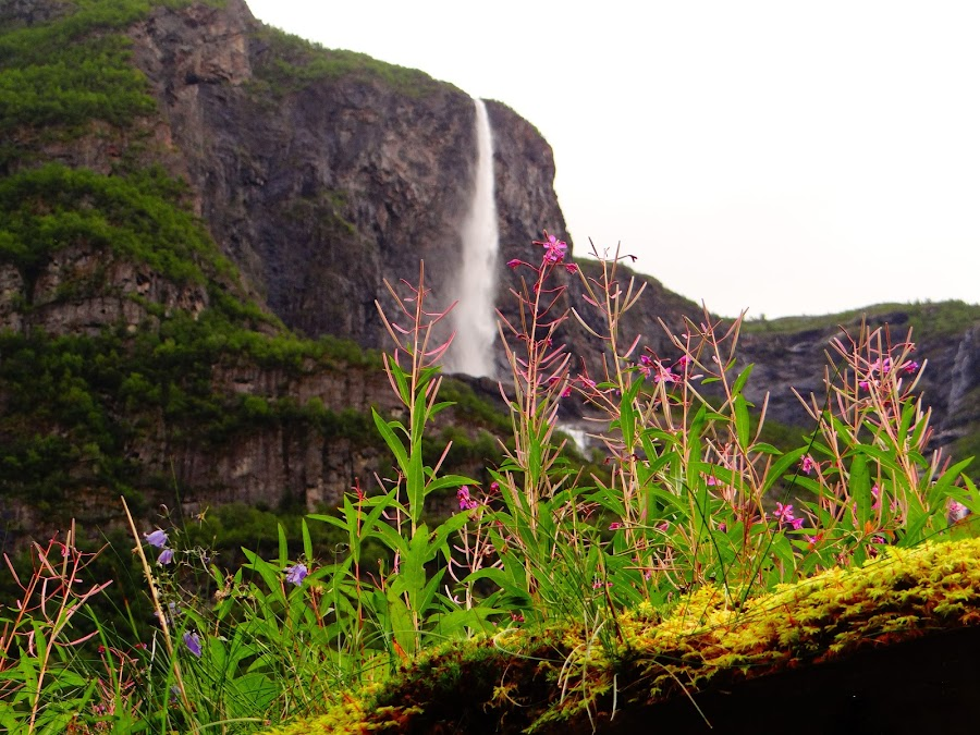 Visions of Norway by Scott Walker - Nature Up Close Rock & Stone ( mountains, waterfalls, moss, summer, flowers, norway )