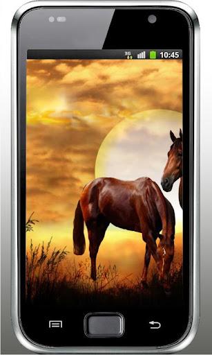 Wild Horses HD live wallpaper