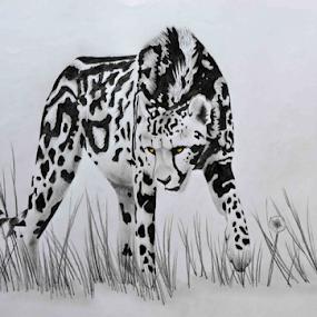 The King by Paul Murray - Drawing All Drawing ( pencil, king cheetah, drawing, animal )