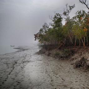 The Shining Mangrove by Kingshuk Mondal - Landscapes Forests ( sundarban, forest, landscape, mangrove, river )