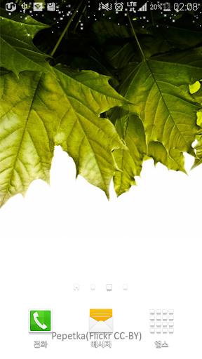 상큼한화이트톤녹색잎배경