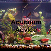 Aquarium Tips and Tricks