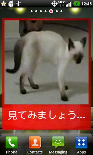 免費下載娛樂APP|猫のしっぽウィジェット app開箱文|APP開箱王