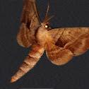 Walnut Sphinx