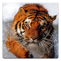 Animal Wallpapers! icon