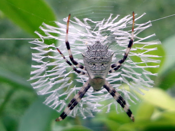 Spiders and arachnids similar yet different essay