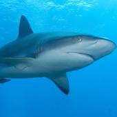 Shark Matching