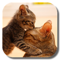 So Cute Cat Live Wallpaper icon