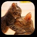 So Cute Cat Live Wallpaper icon