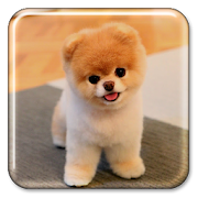 Cachorro Papel parede animado
