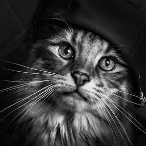 Cat Delight by Sheila Marques - Black & White Animals ( #cats, #norwegianforestcats, #cat, #norwegianforestcat,  )