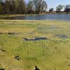 Pond slime