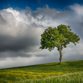 Lone tree on a green field by Maurizio Martini - Landscapes Prairies, Meadows & Fields ( countryside, single, mountain, wood, lone, leaf, pasture, sky, nature, tree, leafy, hill, grass, agriculture, horizon, forest, sunlight, rural, country, environment, season, branch, scene, view, day, natural, plant, land, beauty, landscape, spring, sun, farm, life, sunny, idyllic, cloudy, ecology, lonely, green, cloudscape, field, blue, vista, outdoor, background, meadow, summer, cloud,  )